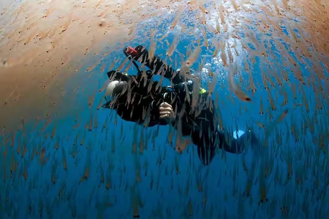 """南极磷虾:6.5亿吨的""""海上金矿"""",中国将是最大""""黑马""""?"""