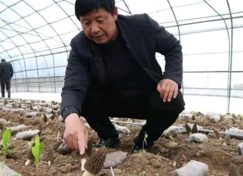 """七峰山下羊肚菌成为广州""""香饽饽"""",方城县好项目带来好收益"""
