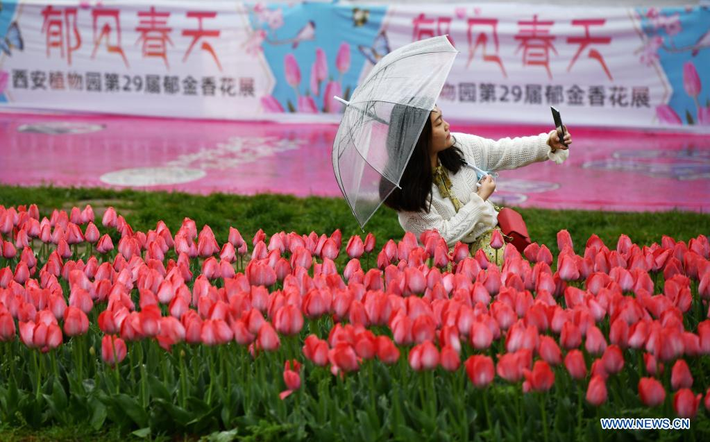 A tourist takes a selfie at Xi'an Botanical Garden in Xi'an, northwest China's Shaanxi Province, April 1, 2021. The 29th spring flower show kicked off recently at Xi'an Botanical Garden. There are more than 30 kinds of tulips planted in the flower show with a total of 200,000 tulips planted in 3,000 square meters. (Xinhua/Li Yibo)