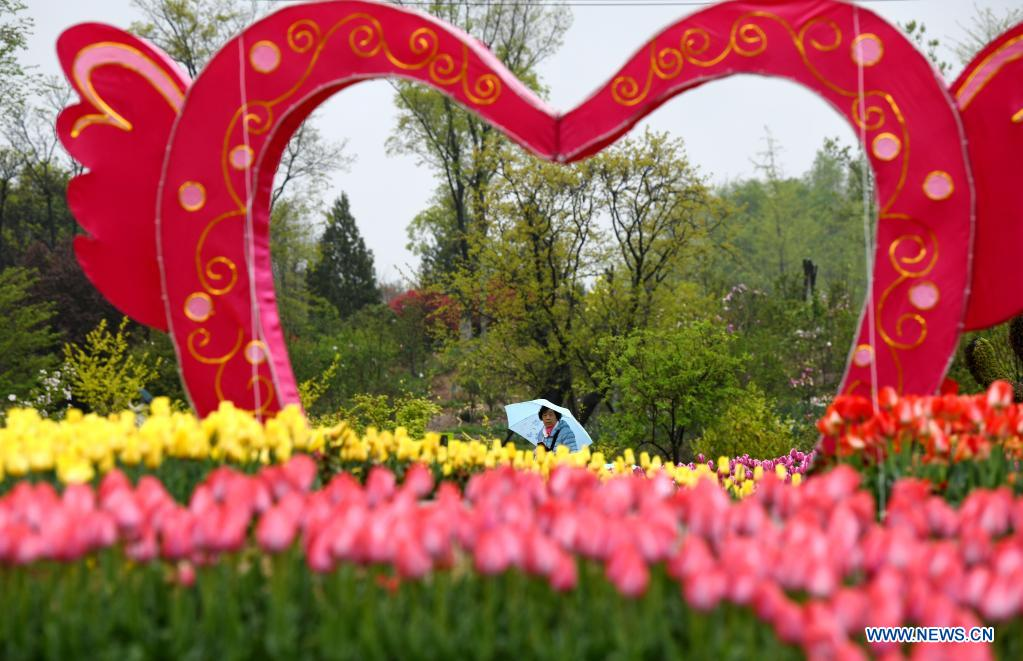 A tourist enjoys flowers at Xi'an Botanical Garden in Xi'an, northwest China's Shaanxi Province, April 1, 2021. The 29th spring flower show kicked off recently at Xi'an Botanical Garden. There are more than 30 kinds of tulips planted in the flower show with a total of 200,000 tulips planted in 3,000 square meters. (Xinhua/Li Yibo)