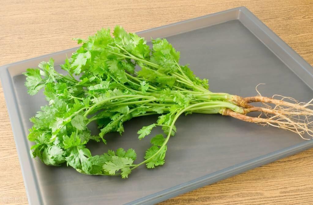 把香菜放到盒子里,存1年都不会坏,新鲜又翠绿,还能随吃随拿