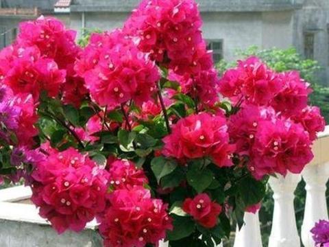 清明将至,养花就养4种花,花色多,一盆能养一辈子