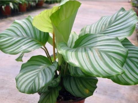 清明将至,养花就养4种花,1月长1米,养家里壮观又养眼!
