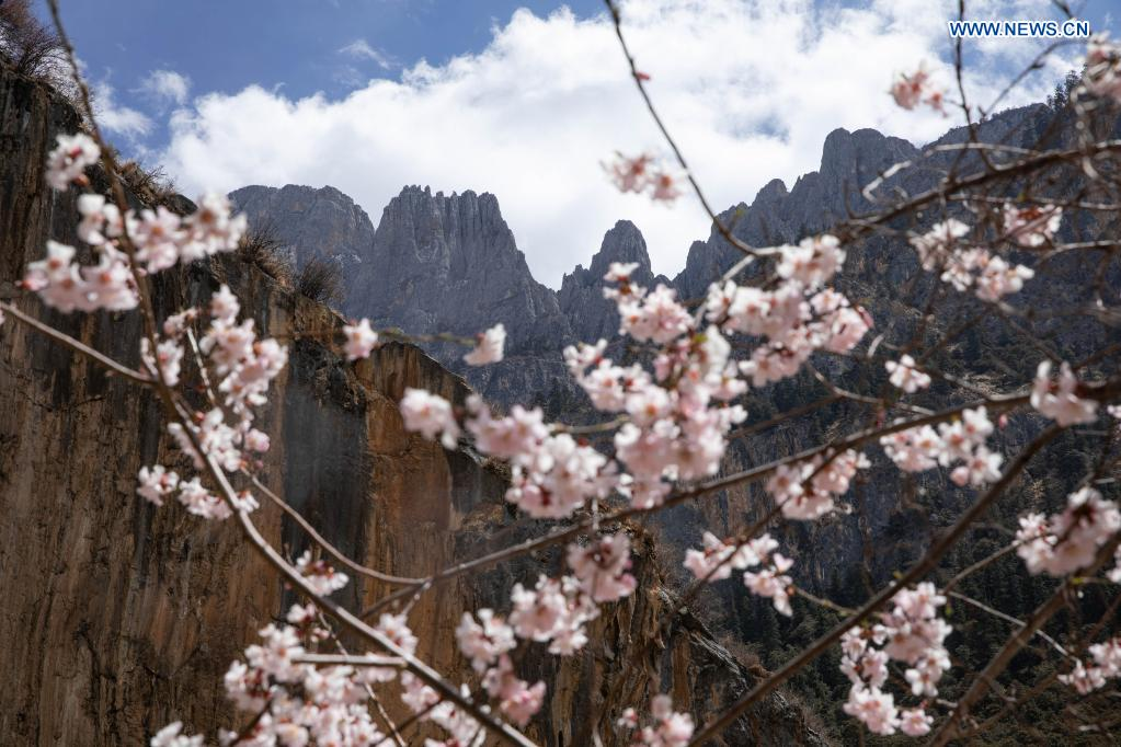Photo taken on April 4, 2021 shows the scenery of mountains in Zhage Village of Taiyanggu Town in Derong County, southwest China's Sichuan Province. Peach blossoms are in full bloom in Derong County. In recent years, the local government has taken advantage of the natural resources to develop rural tourism and helped increase villagers' income. (Xinhua/Jiang Hongjing)