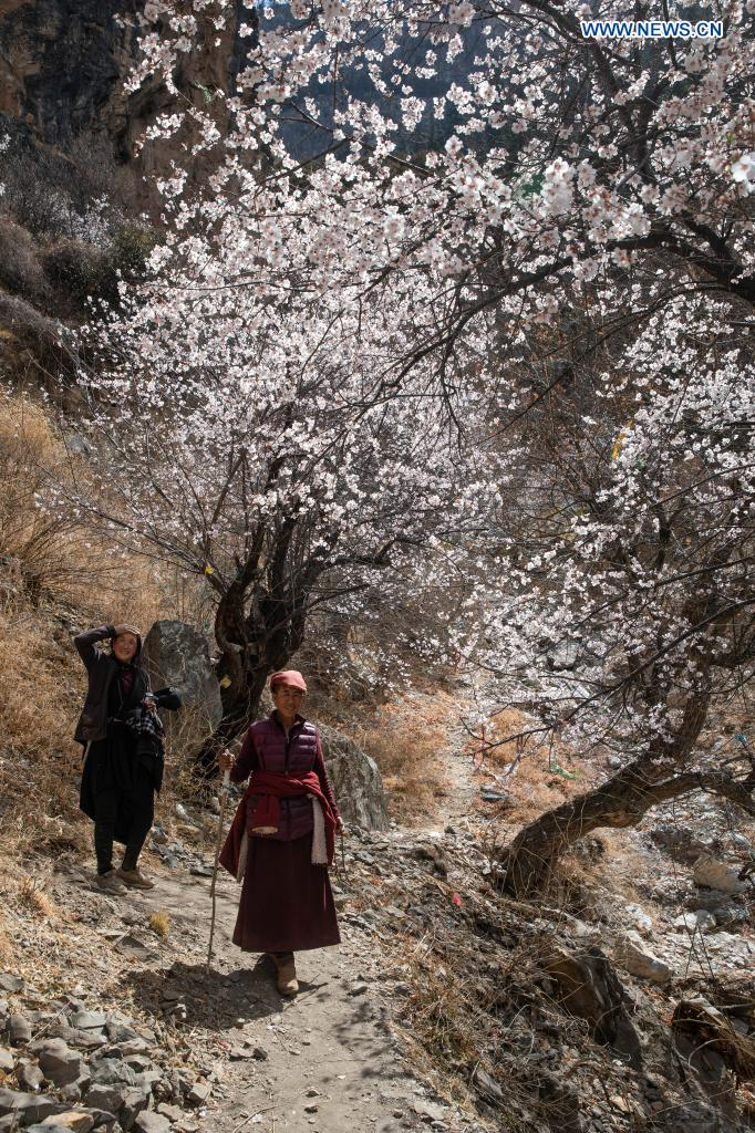 People walk among peach blossoms in Zhage Village of Taiyanggu Town in Derong County, southwest China's Sichuan Province, April 4, 2021. Peach blossoms are in full bloom in Derong County. In recent years, the local government has taken advantage of the natural resources to develop rural tourism and helped increase villagers' income. (Xinhua/Jiang Hongjing)