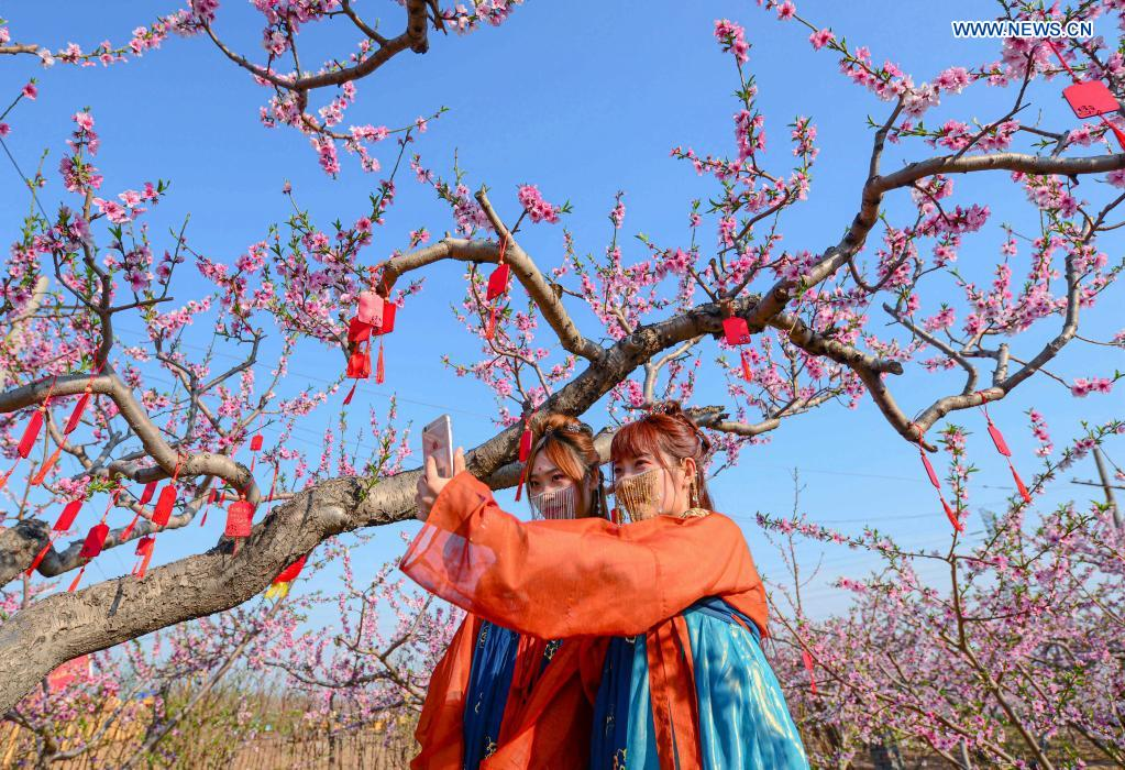 Tourists take selfies at a peach garden demonstration area in Nanbu Township of Handan City, north China's Hebei Province, April 4, 2021. Peach blossoms are in full bloom in Nanbu Township, attracting many tourists. (Xinhua/Wang Xiao)