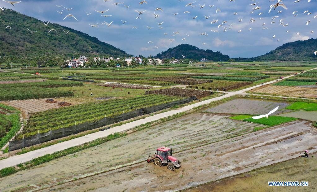 Aerial photo taken on April 5, 2021 shows farmers working in a field in Guangpo Town, Lingshui Li Autonomous County, south China's Hainan Province. As the temperature gradually rises around the time of Qingming Festival, farming activities are in full swing across the country, from the north to the south. (Xinhua/Guo Cheng)