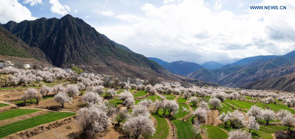 Photo taken on April 3, 2021 shows the scenery of Ridang Village of Baisong Town in Derong County, southwest China's Sichuan Province. Peach blossoms are in full bloom in Derong County. In recent years, the local government has taken advantage of the natural resources to develop rural tourism and helped increase villagers' income. (Xinhua/unreguser)