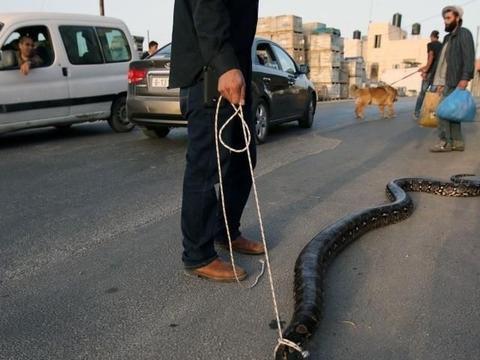 男子带爱犬去玩的路上,碰到3米巨蛇,狗狗的行为亮了!