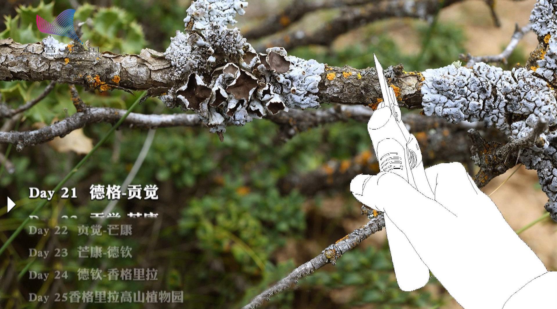 在青藏高原上科考是种什么体验?