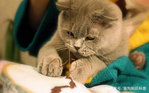 菲尔顿宠物:猫身上有螨虫吗