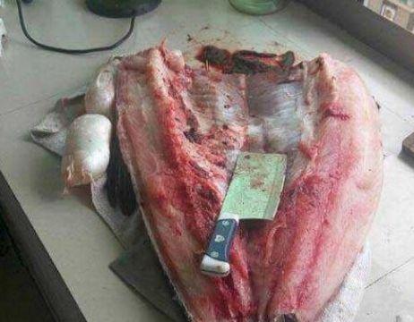 男子花300元买回一条青鱼,被女朋友骂,切开鱼后不淡定了