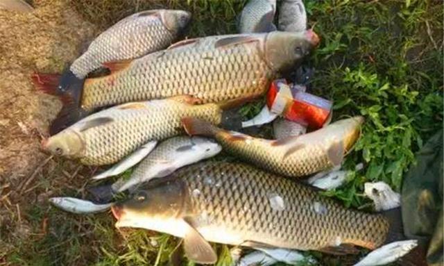 晚春钓鲤鱼,分享几款自制粮食饵,饵料对了口,大鲤鱼也能连竿上