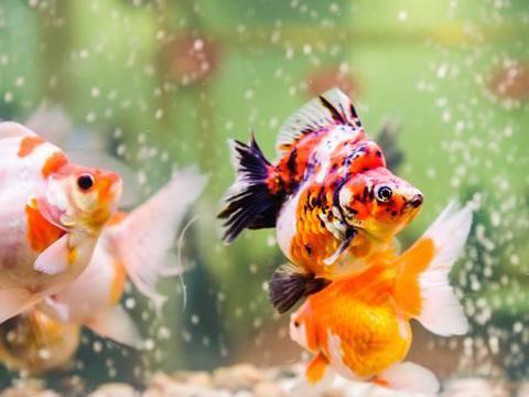 鱼食能解决鱼的温饱,还关乎鱼的健康,聊聊关于冷冻鱼虫的事