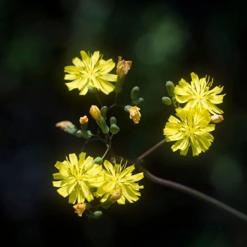 是山中野菊,也像一只孤雁 每日一诗