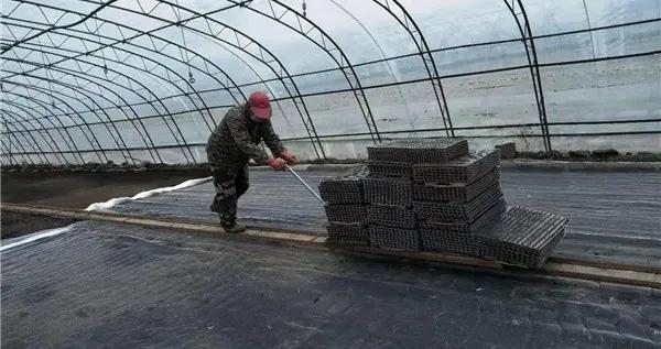 饶河县:推进机械化抛秧进程助推农业增效