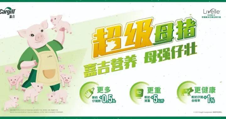 """农业农村部杨振海:猪价回落到往年较低水平不现实,猪业发展不能搞""""一刀切"""""""
