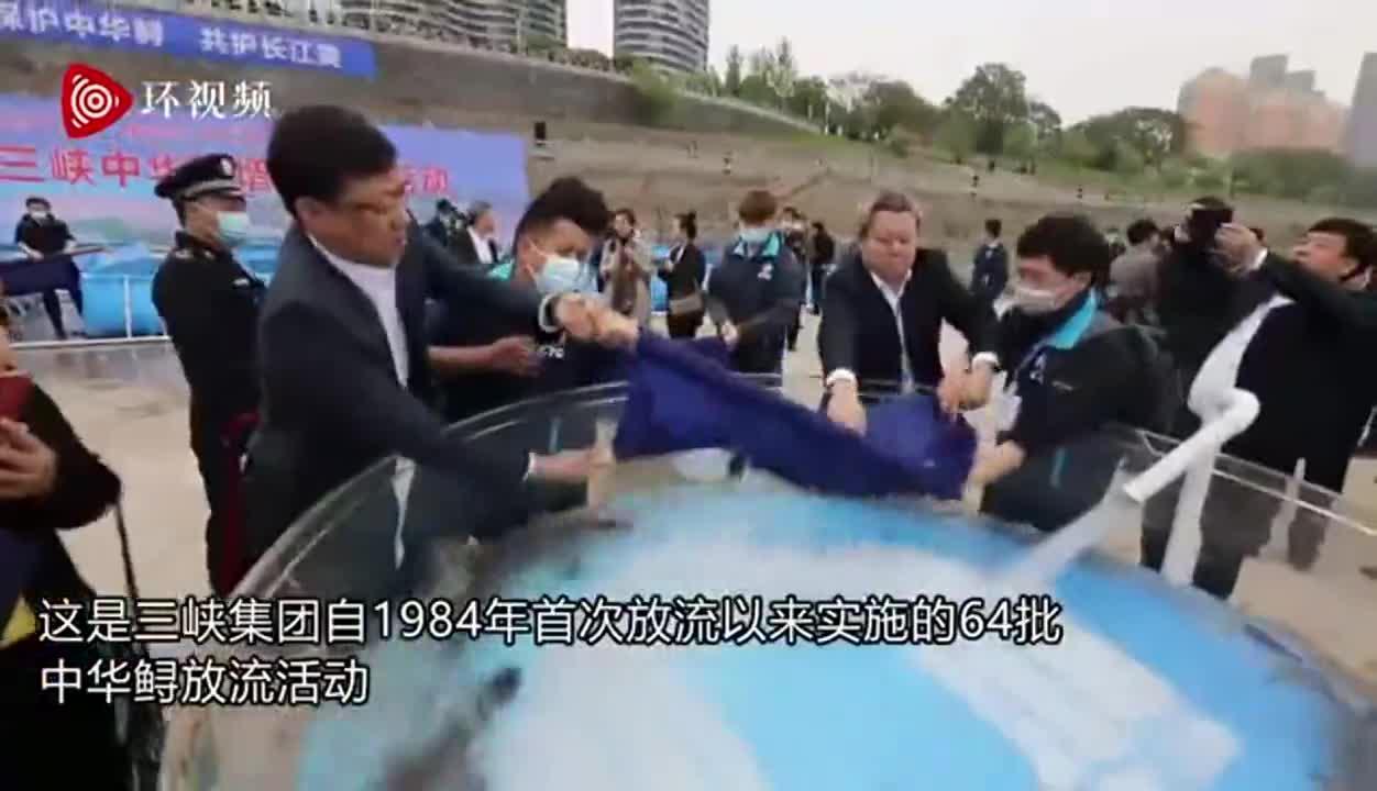 《长江保护法》实施后首次大规模放流活动 10000尾中华鲟放归长江