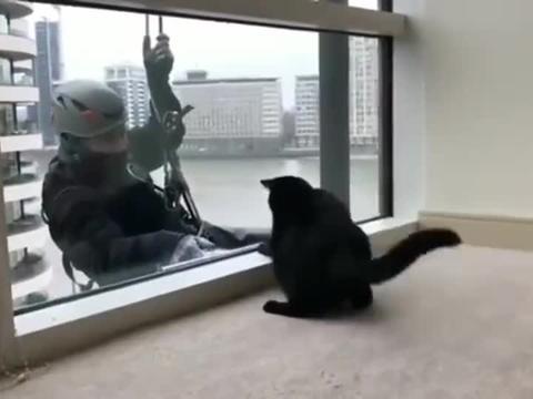 玻璃清洁工与猫咪,这一定是整栋楼最干净的一块玻璃