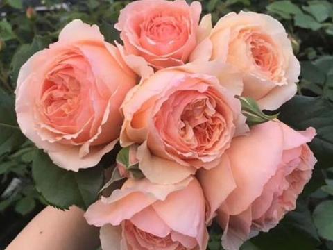 4月,桃花缠身,姻缘将至,3星座永浴爱河,温馨甜蜜