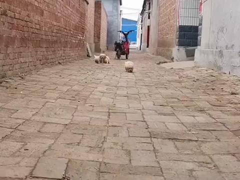小奶狗:跑那么快干什么,休息一下再说!