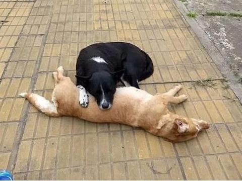 男子的爱犬被偷狗人意外毒死,另一条爱犬的行为,让人无法淡定