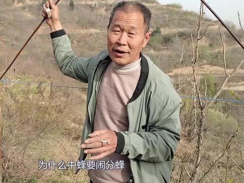 国宝箱养中蜂,靳老师向徒弟分享新王交尾质量,对蜂群有啥影响