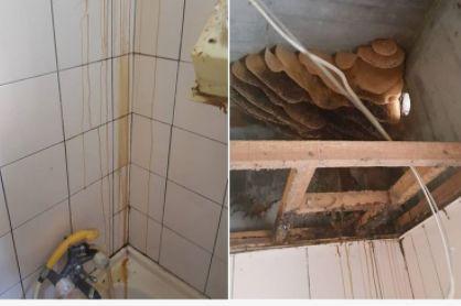 男子发现浴室流黄色液体,打开天花板仔细看后,手机一扔撒腿就跑