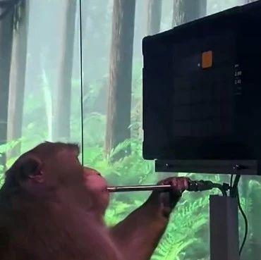 猴子用意念打游戏?马斯克公布最新突破!视频曝光→