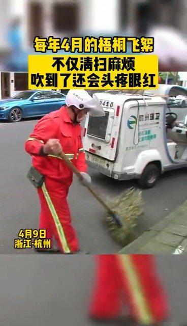 杭州试点飞絮抑制率超过95%!