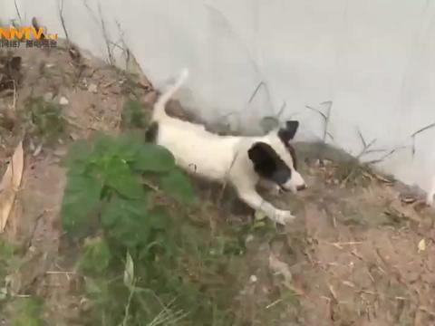 孤独的小狗在街上等待可以带它回家的人,主人怎么舍得丢弃它