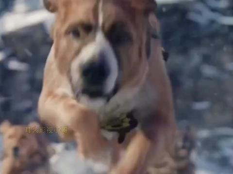 这样的爱犬谁不想有一只呢,坑比神犬小七呀......