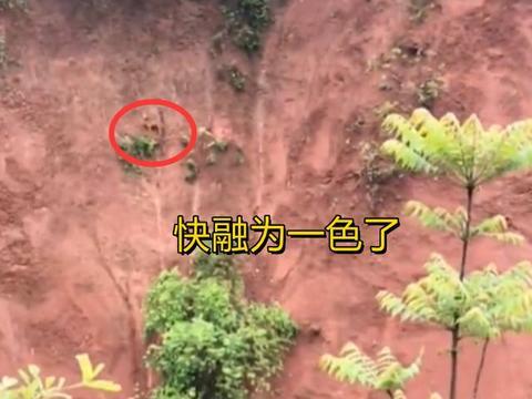 湖南:狗被困陡峭悬崖一周,见到主人后,拼命狂吠吼叫