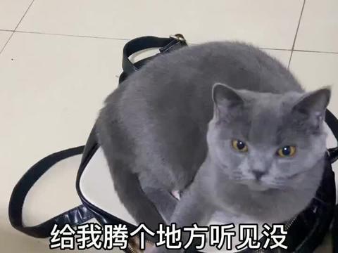 猫咪也不知道自己多大体格子,这小的包也一个劲往里钻