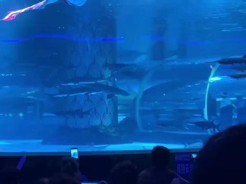 第一次看美人鱼表演,还是外国妞,这身材太棒了,这次有眼福了!