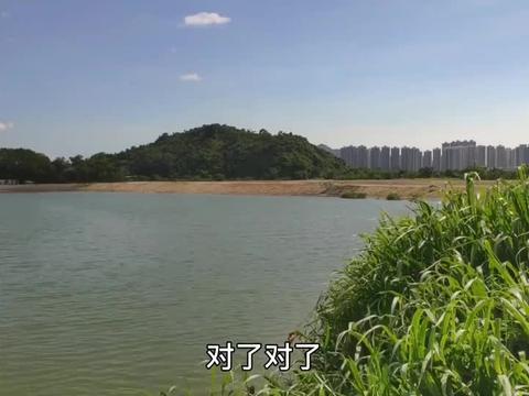 香港少有的大型生态鱼塘,坐着钓鱼就能看到深圳,空气好风景又美
