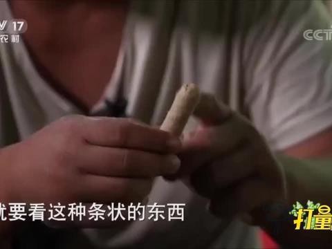 饭来张口?嘉积鸭不主动进食,要养殖户亲自喂到嘴边丨谁知盘中餐