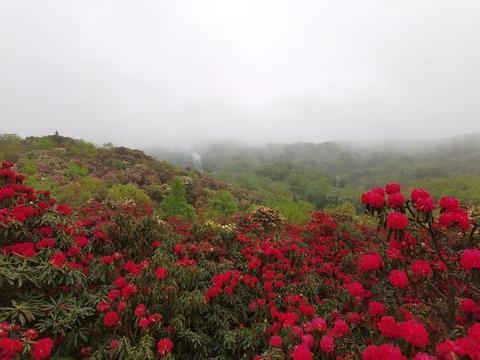"""藏在贵州的""""天然花海"""",春游不可错过,就在毕节值得一来"""