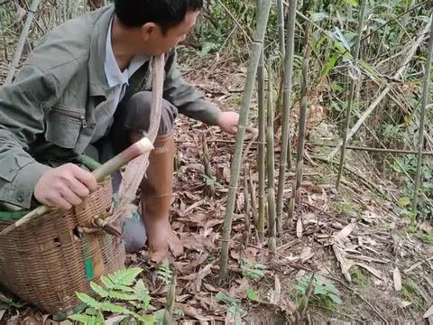 大叔去山里拔水竹笋,满山的竹笋没人要,不一会就拔了满满一筐