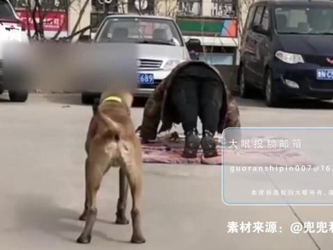 """狗子模仿主人""""俯卧撑"""",步调完全一致"""