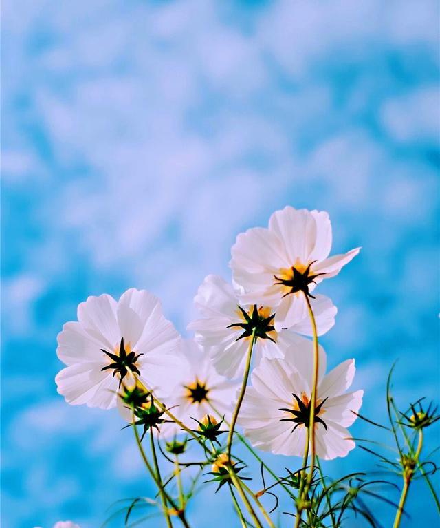 四月送给自己的励志句子,阳光美好,句句入心
