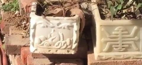郑州一户人家门口用骨灰盒当花盆,网友:绝对没人敢动