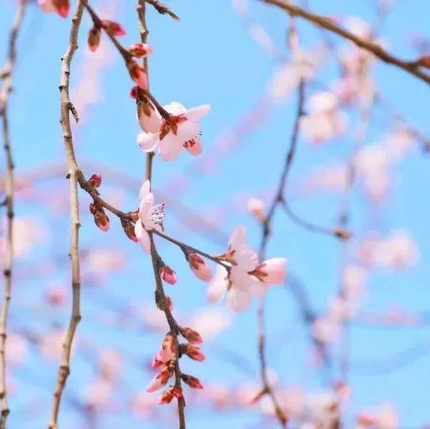 最是一年春好处 绝胜春景满金城