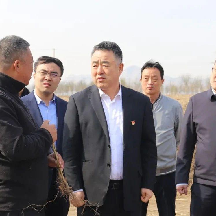 忻府区:栽桑养蚕项目将落地这个村,区委书记现场调研