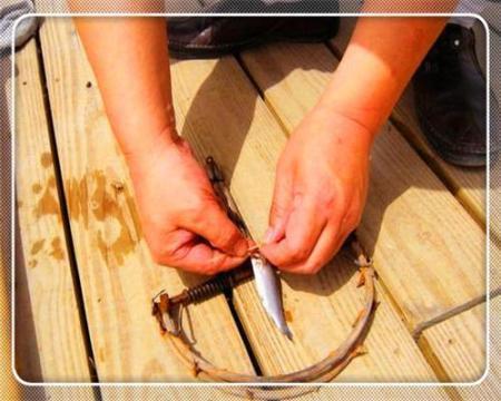 男子用老鼠夹钓鱼遭到钓友们嘲笑,结果令钓友们对男子称赞有加