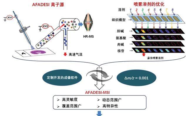 空间代谢组学:一种高灵敏、高覆盖质谱成像技术新技术