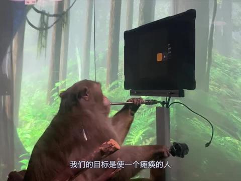 马斯克:这只猴子只通过神经链接在用自己的意念玩游戏