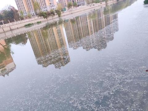 河面飘落的是什么?四月飞雪吗