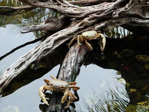 星座运势,6月的巨蟹座事业心懒散,缺乏动力