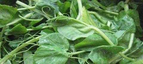 这4种蔬菜常给孩子吃,改善肠胃,帮助消化,增强身体抵抗力